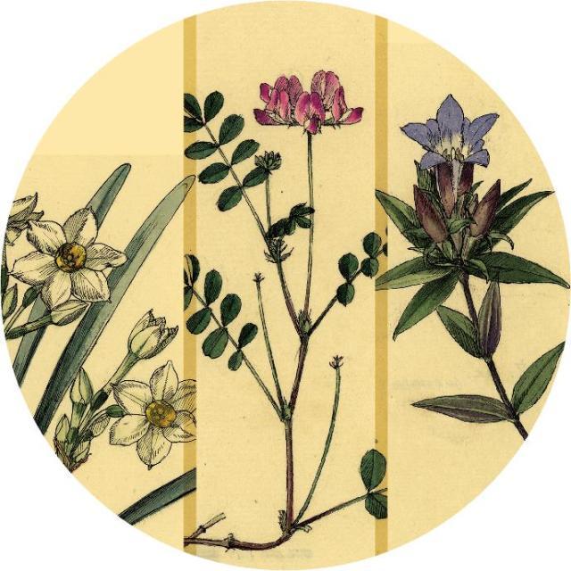 特別公開 『東大植物学と植物画――牧野富太郎と山田壽雄vol.2』