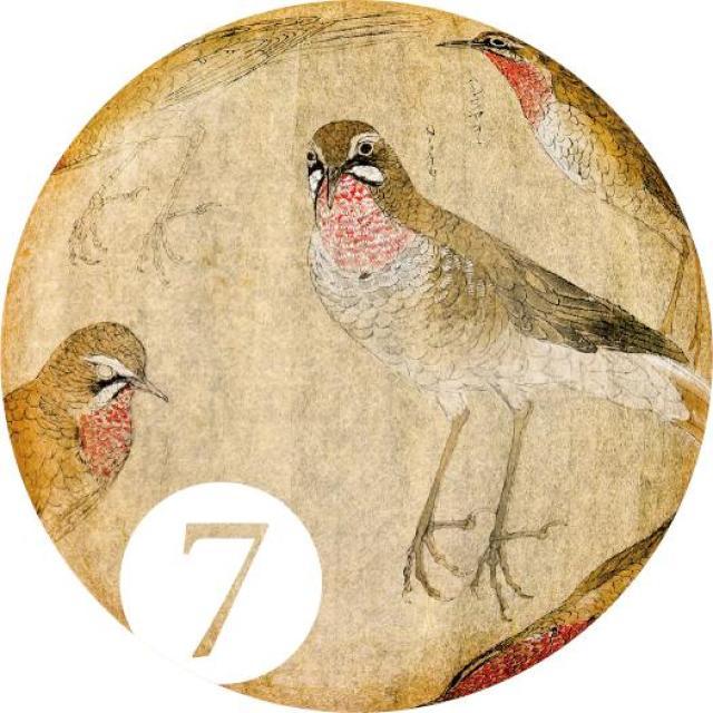 特別展示『アヴェス・ヤポニカエ(7) ——日々是鳥日』